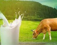 Методы охлаждения молока